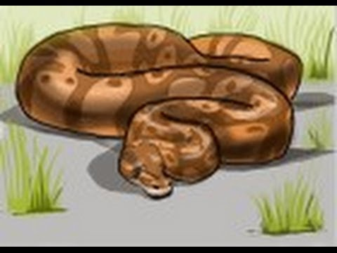 480x360 How To Draw A Python Snake