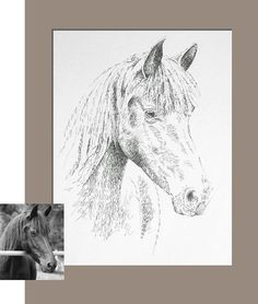 236x278 American Quarter Horse Art Drawn From The Words American Quarter