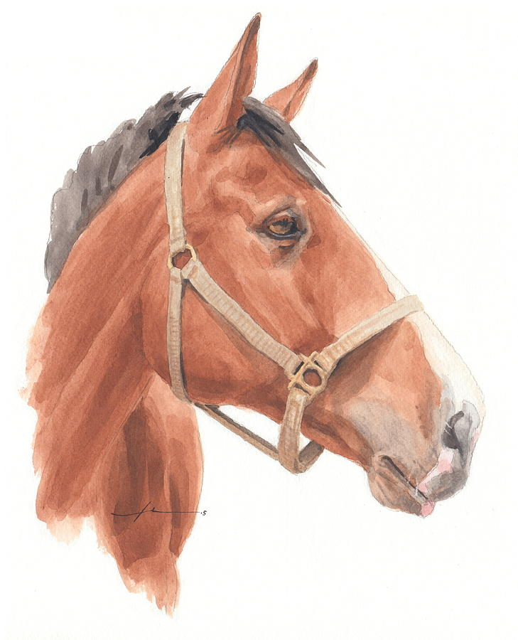 729x900 Horse Face Watercolor Portrait Drawing By Mike Theuer