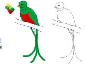 300x235 How Draw Quetzal Pictures For The Birds