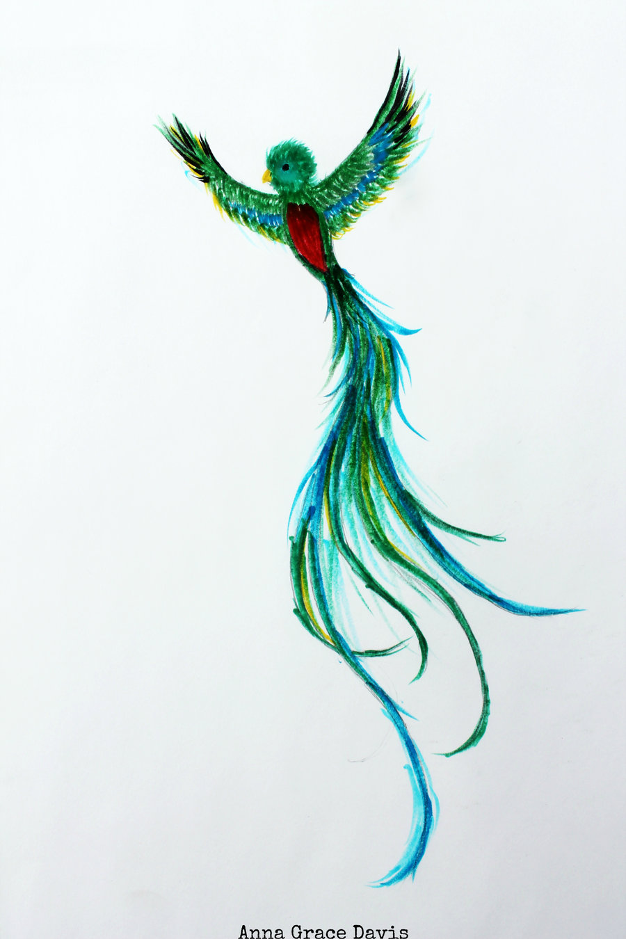 Quetzal Drawing at GetDrawings.com   Free for personal use ...