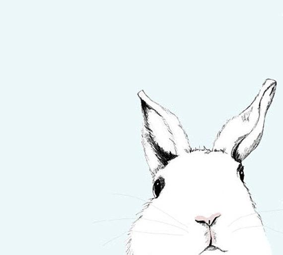 570x515 Rabbit Art Rabbit Drawing Childrens Room Decor White Rabbit