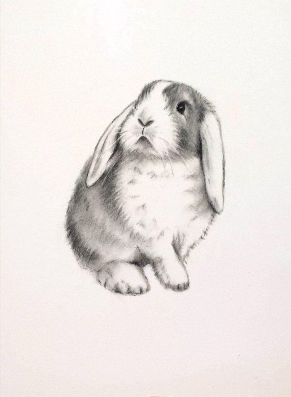 570x777 Rabbit Art, Original Charcoal 5x7 Lop Eared Rabbit Drawing