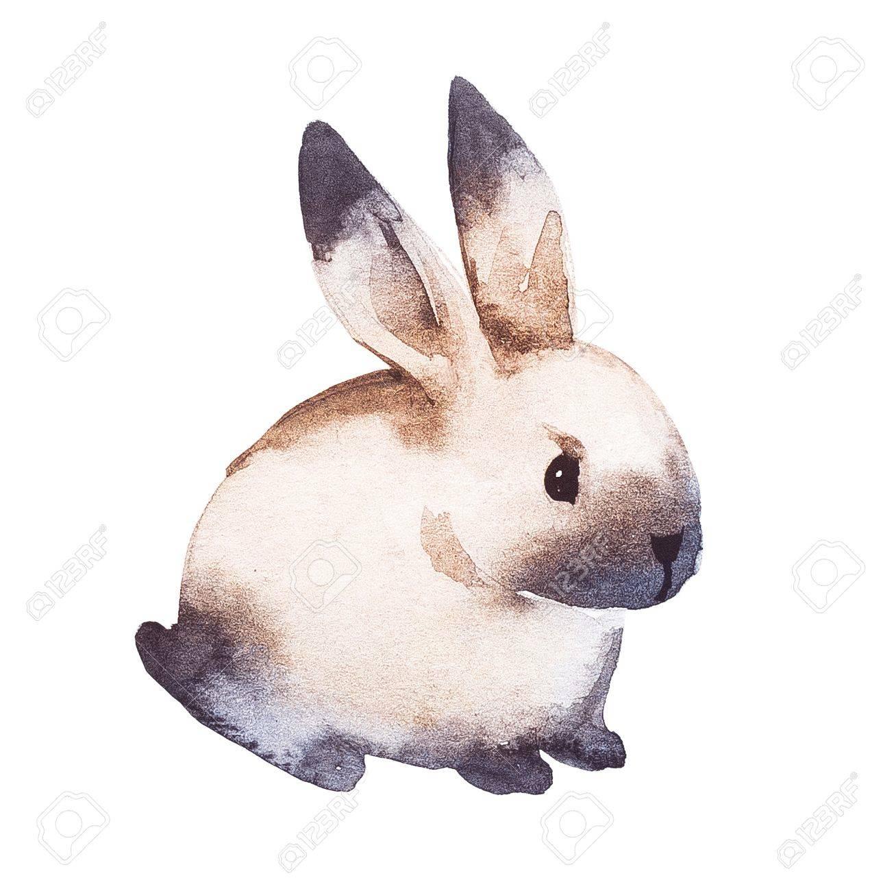 1289x1300 Cute Brown Rabbit. Watercolor Hand Drawing Illustration Stock