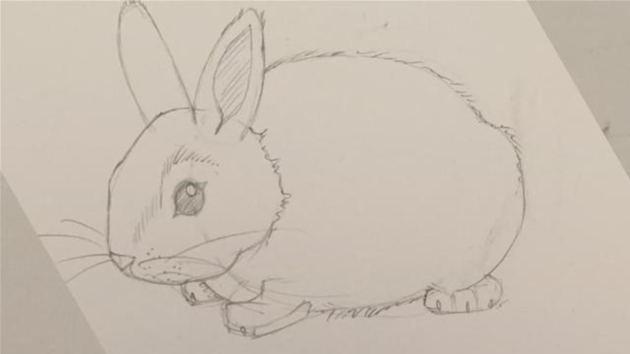 1280x720 How To Draw A Baby Bunny