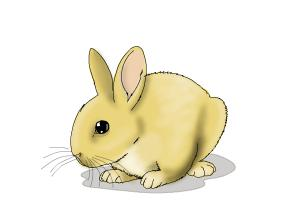 300x200 How To Draw Rabbit Step By Step