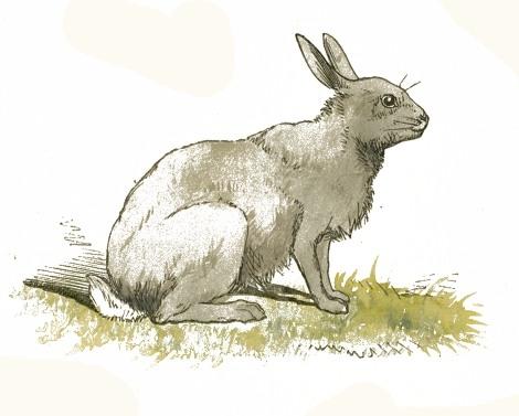 470x377 Rabbit Drawing