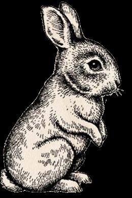 260x389 Rabbit Line Drawing