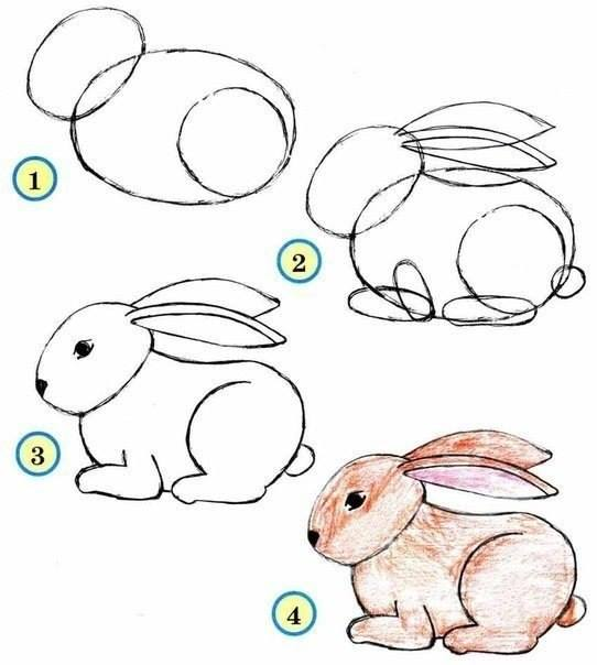 542x604 how to draw zoo animals easily