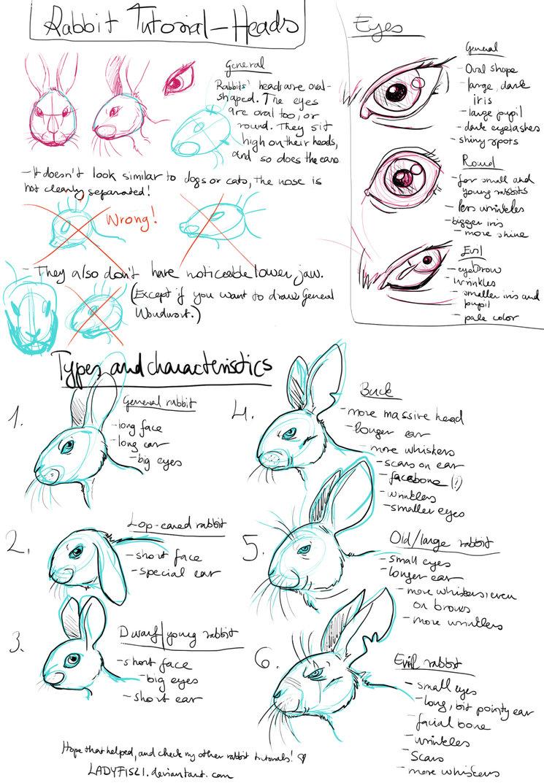 745x1073 Rabbit Drawing Tutorial Pt1