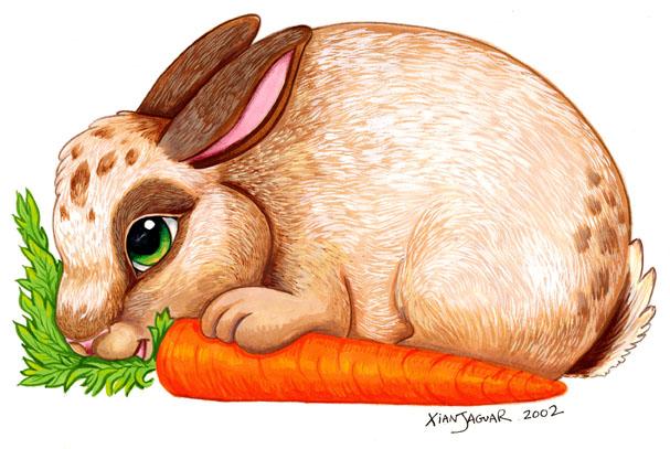 607x407 Bunny And Carrot By Xianjaguar