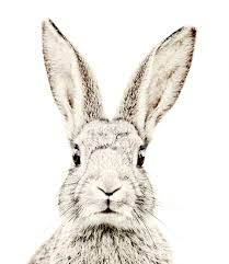 209x241 Image Result For Rabbit Face Drawing Monkey