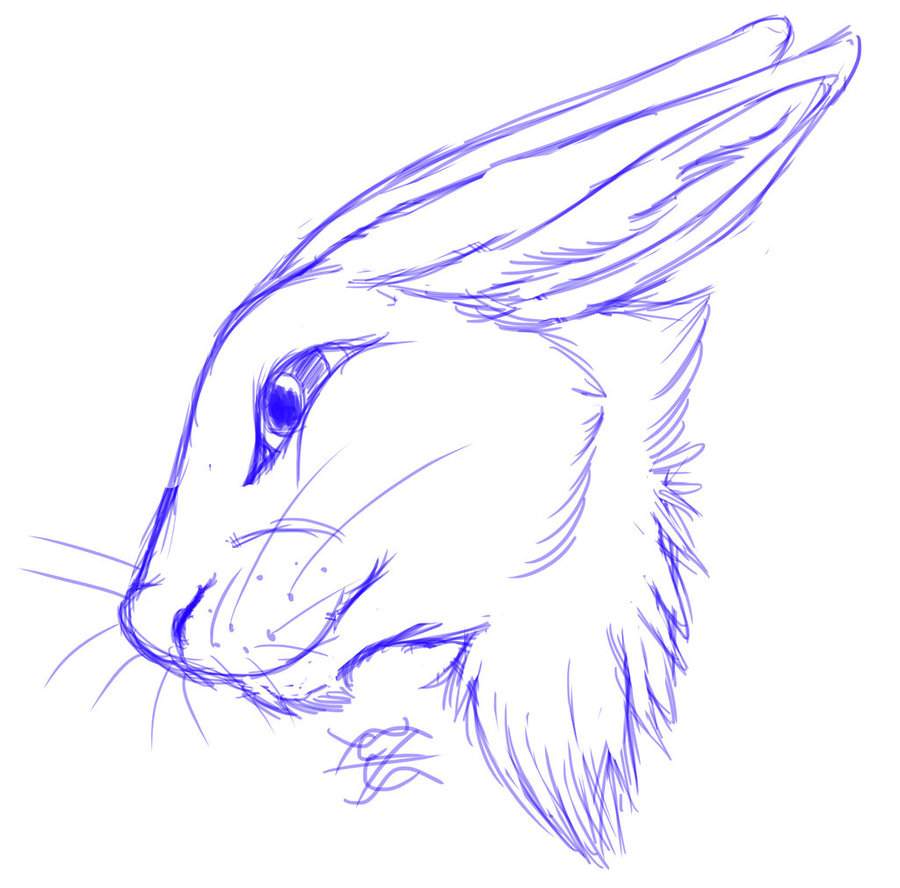 900x888 Daily Drawing Day 230 Rabbit Head Sketch By Midnighthuntingwolf