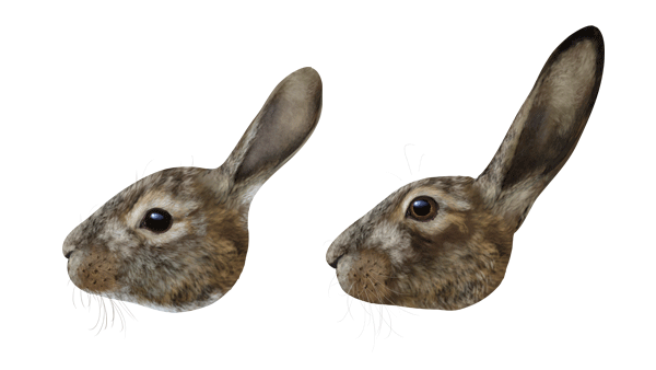 600x338 How To Draw Animals Hares And Rabbits