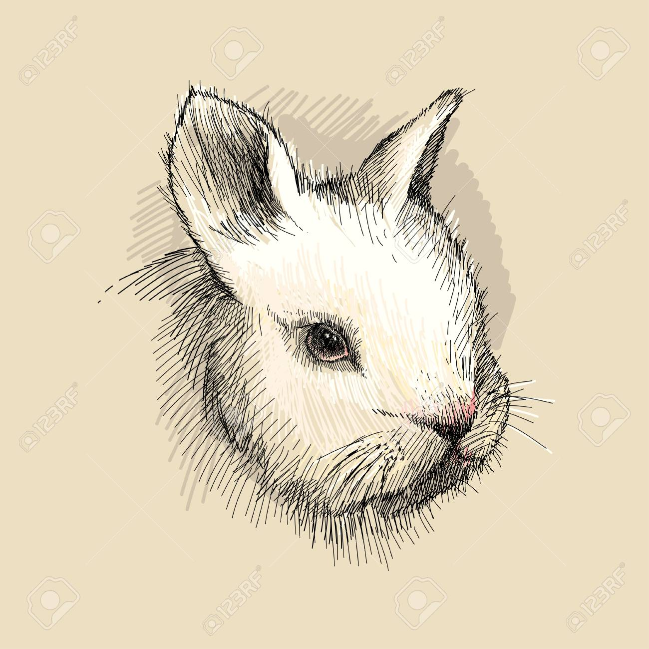 1300x1300 Vector Graphic Sketch Of White Baby Rabbit Profile On The Beige