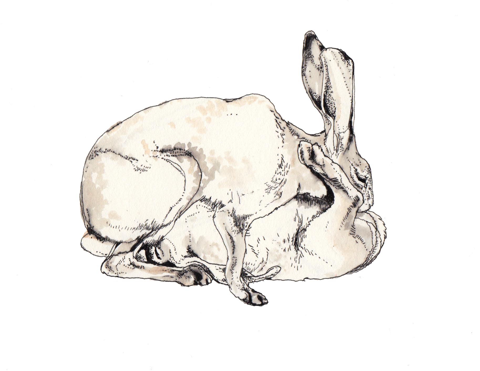 1827x1410 Wallpaper Drawing, Illustration, Cartoon, Skull, Head, Rabbit