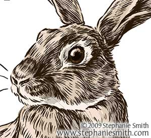 300x274 Year Of The Rabbit