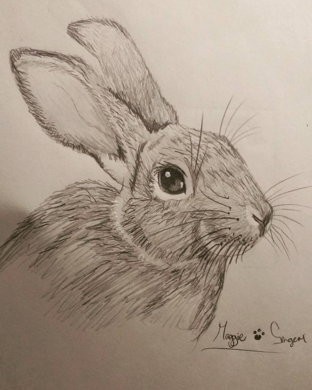 620x775 Animal Drawings, Art Ideas Design Trends