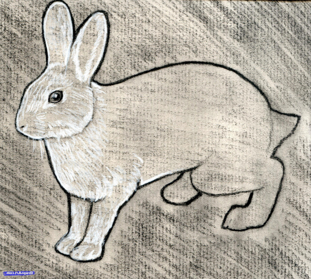 1024x920 Rabbit Sketch In Pencil Rabbit Pencil Drawing How To Sketch