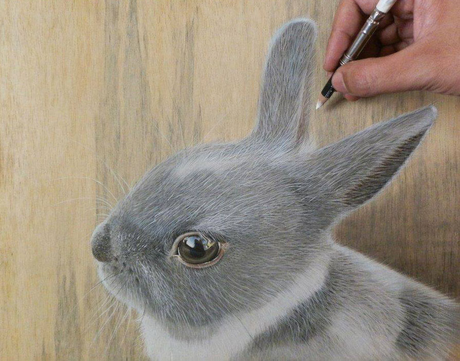 894x703 Rabbit Pencil Drawing By Ivan Image