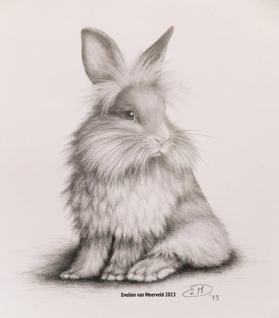 897x1024 Bunny Graphite Pencil Drawing.