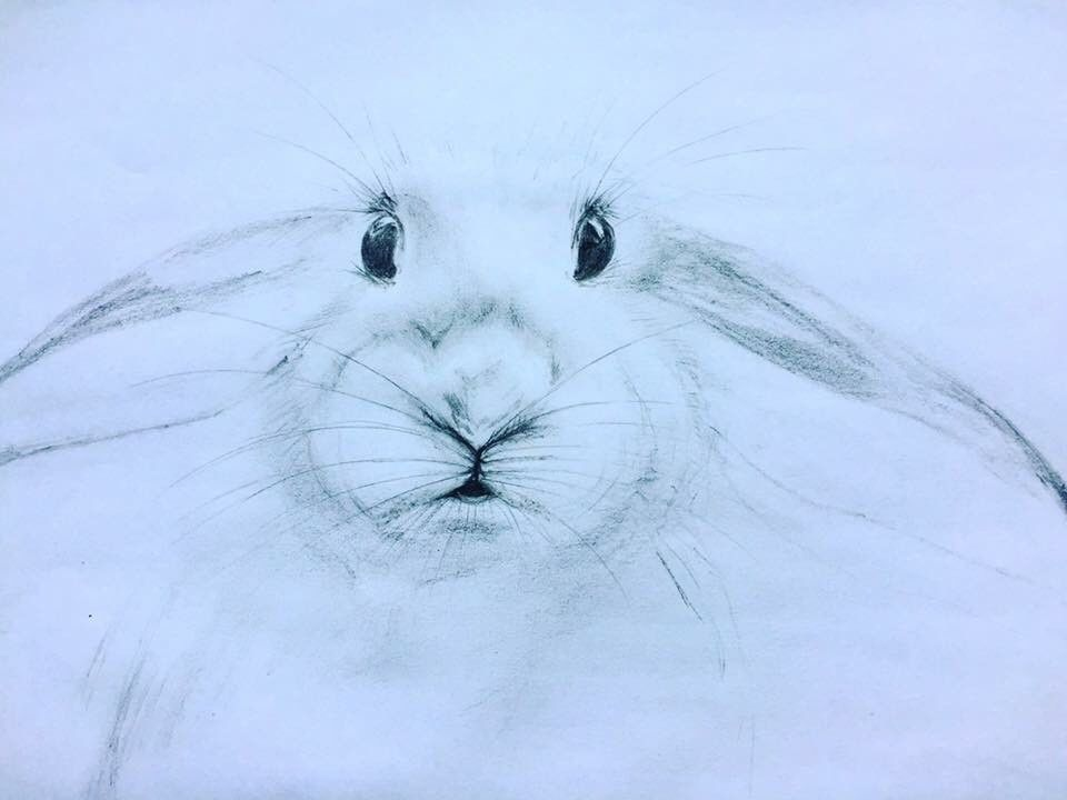 960x720 Rabbit Sketch Drawing In Bournemouth, Dorset Gumtree