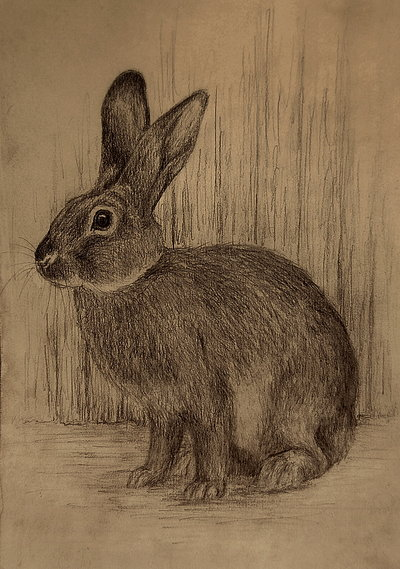 400x569 Rabbit Sketch By Moussee