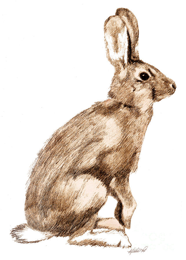642x900 Curious Rabbit Drawing By Kristen Fox
