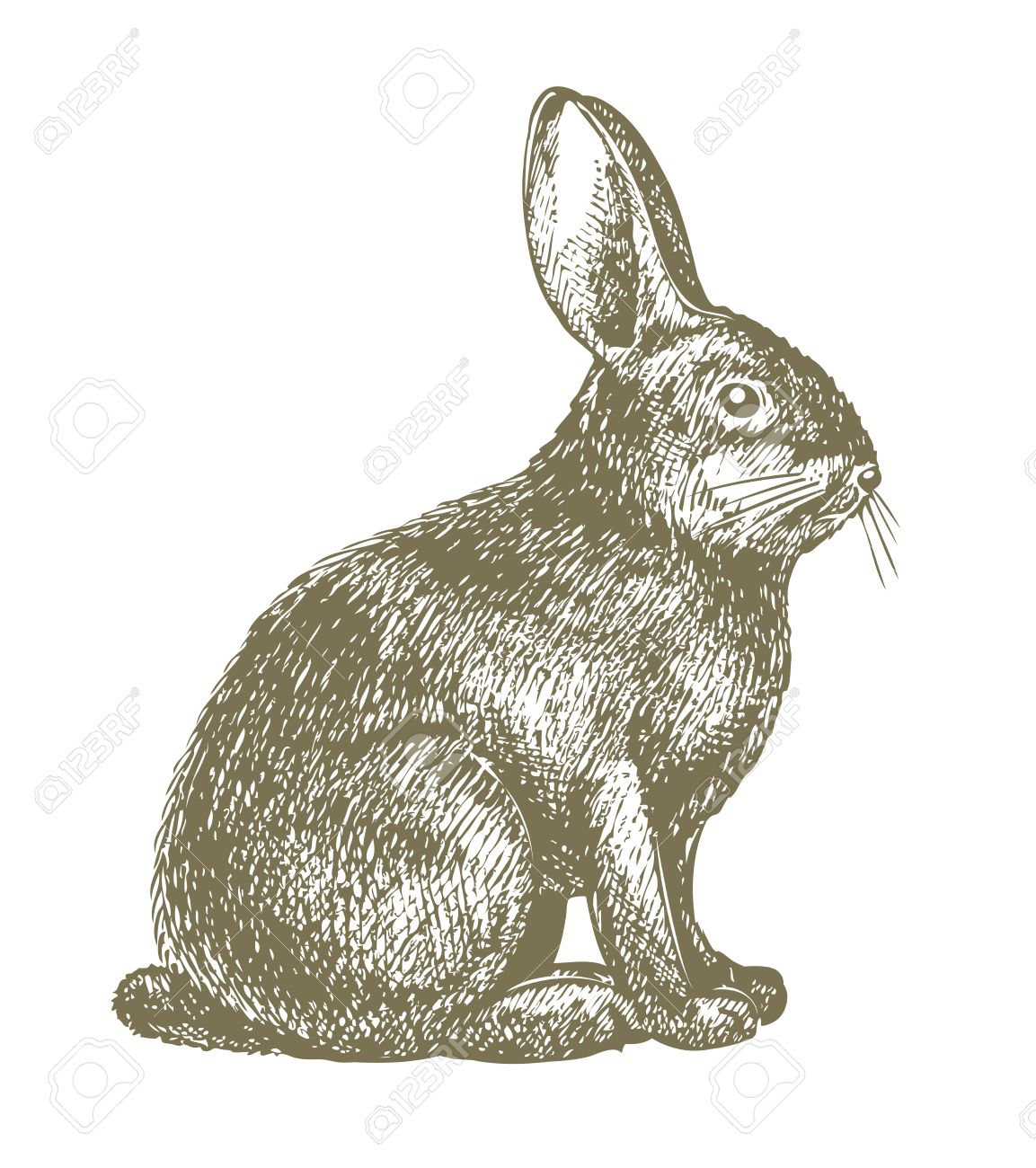 1153x1300 Rabbit Drawing Royalty Free Cliparts, Vectors, And Stock