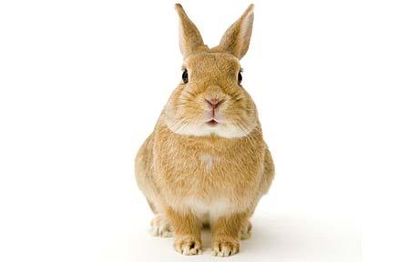 460x288 Teacher With Rabbit Phobia To Sue 14 Year Old For Drawing Bunny