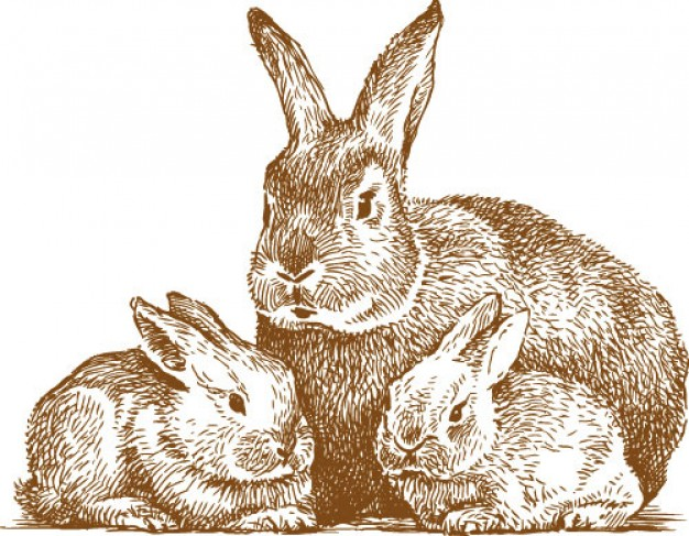 626x487 Three Rabbits Family Drawing By Hand Download Free Animal Vectors