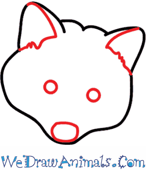 300x350 How To Draw A Raccoon Dog