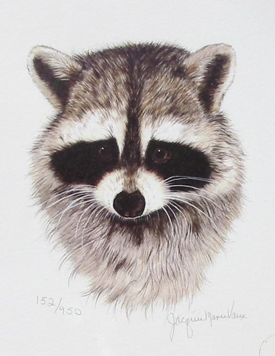 537x693 146 Best Tatoos Images On Raccoons, Wild Animals