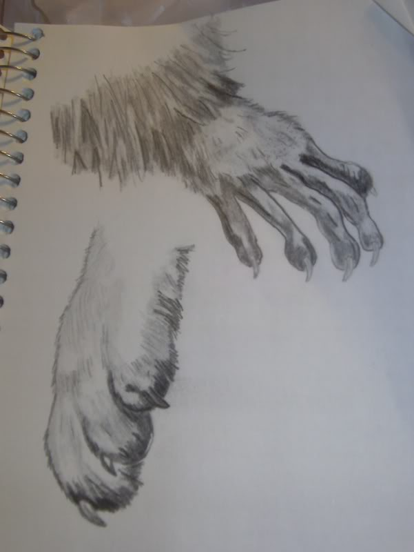 601x800 Drawing Raccoon Hand And Puppy Paw Pencil By Boardermiah