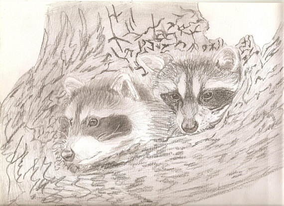 570x415 Portrait Pencil Sketch Baby Raccoons In Tree 9 X 12 Inches