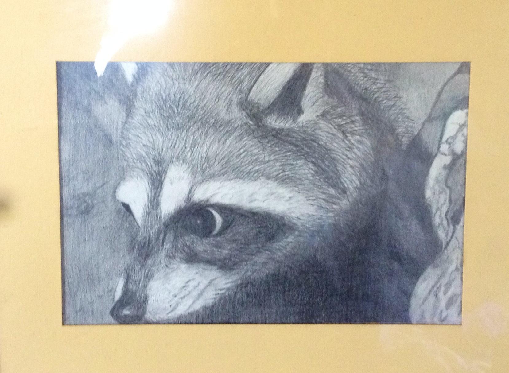 1658x1215 Raccoon Pencil Drawing, 9th Grade