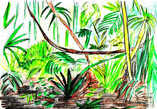 550x381 How To Draw A Rainforest Scene 9 Steps (With Pictures)