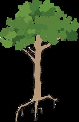261x400 Drawn Rainforest Rainforest Tree