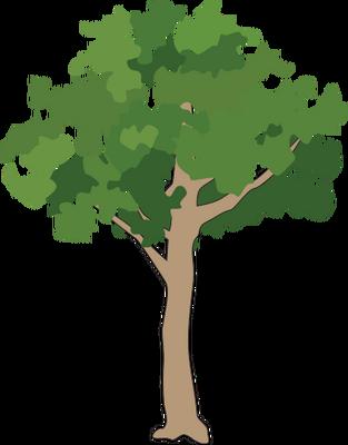 313x400 Drawn Tree Rainforest