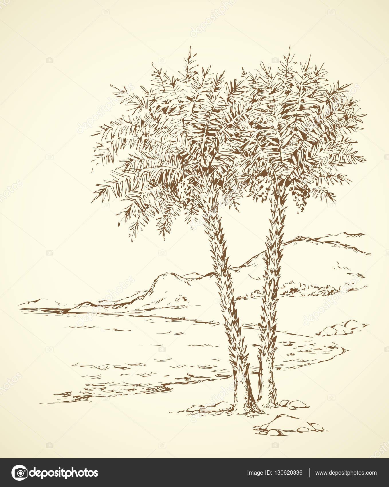 1358x1700 Palm Trees On The Beach. Vector Drawing Stock Vector Marinka