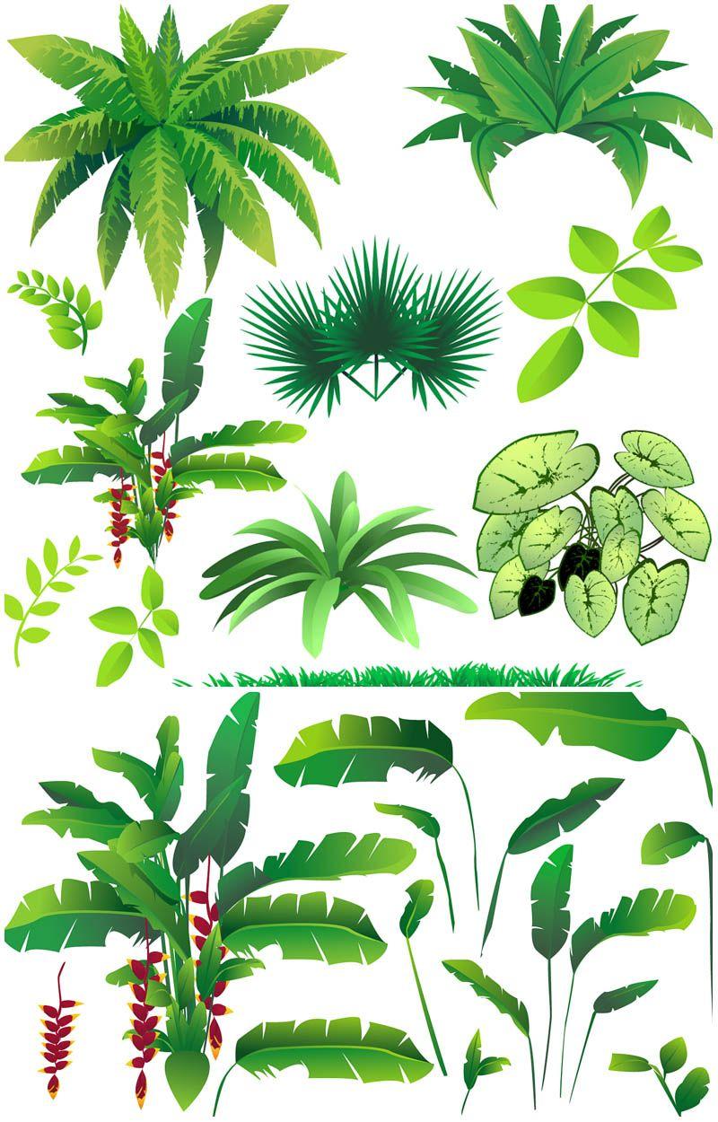 800x1250 Rainforest Plants Vector Vector Graphics Blog