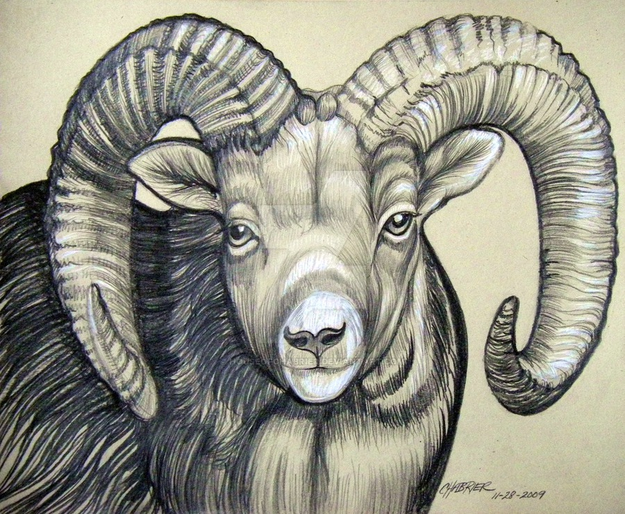 900x740 Big Horn Ram 2 By Houseofchabrier