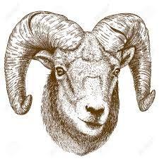 225x225 Resultado De Imagen Para Ram Animal Drawing