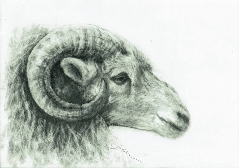 770x543 Saatchi Art Ram Profile Drawing By Jv