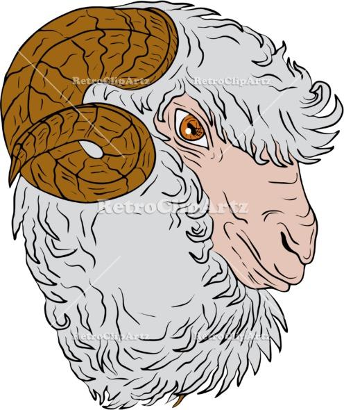 496x590 Merino Ram Sheep Head Drawing Vector Stock Illustration. Vdrawing