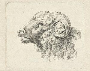 300x237 Ram Head Drawings Fine Art America