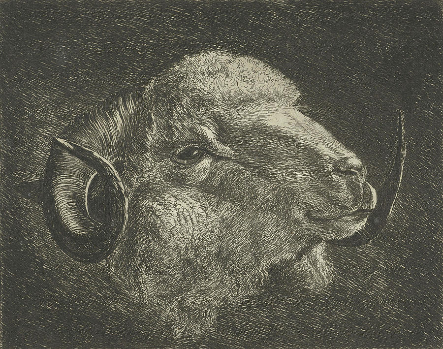 900x709 Head Of A Ram With Twisted Horns Backward Drawing By Jacobus