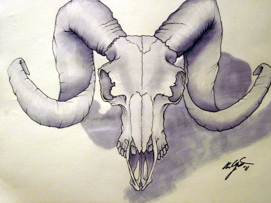 900x675 Ram Skull By Zenangel13