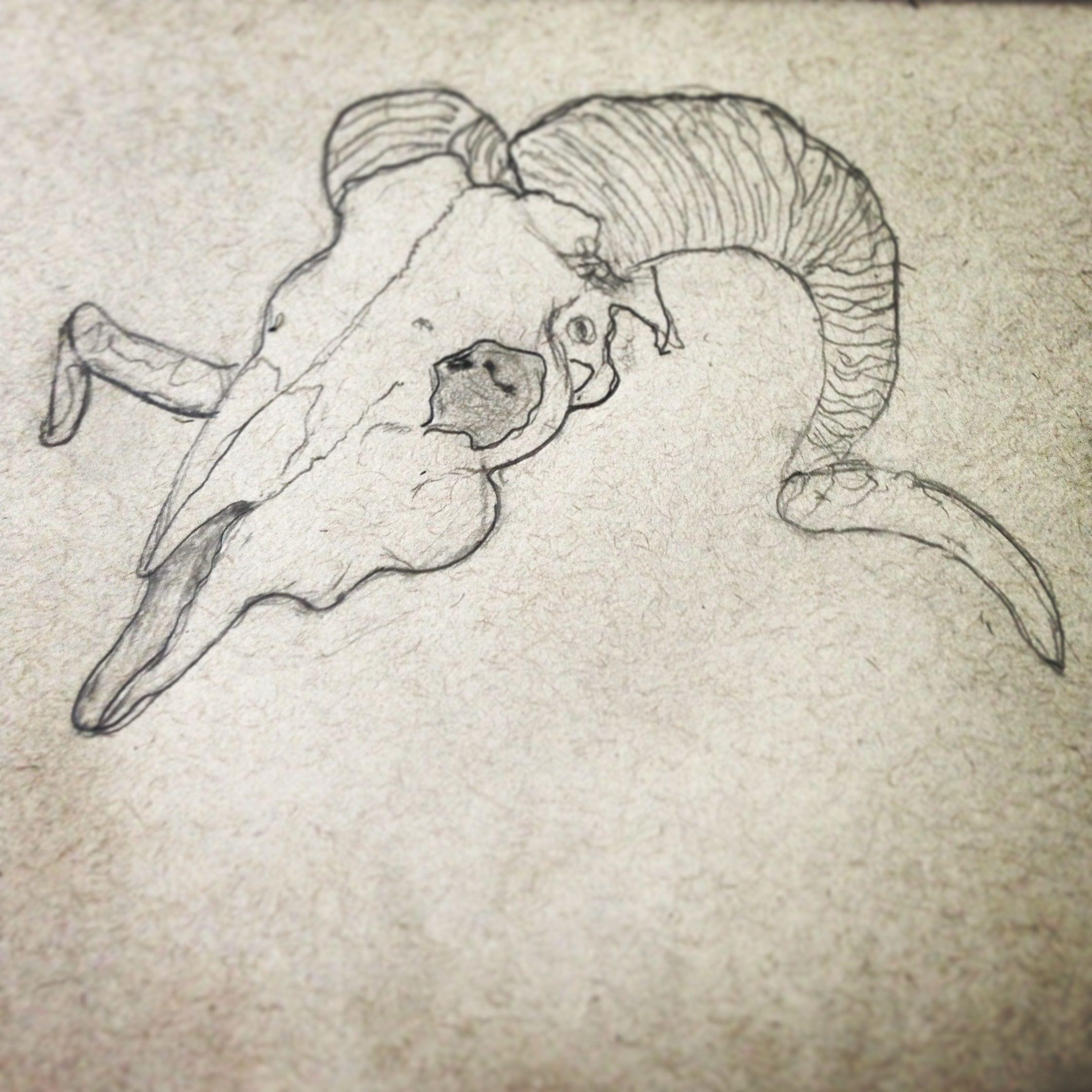 2244x2244 Ram Skull Drawing Art Ram Skull, Drawings