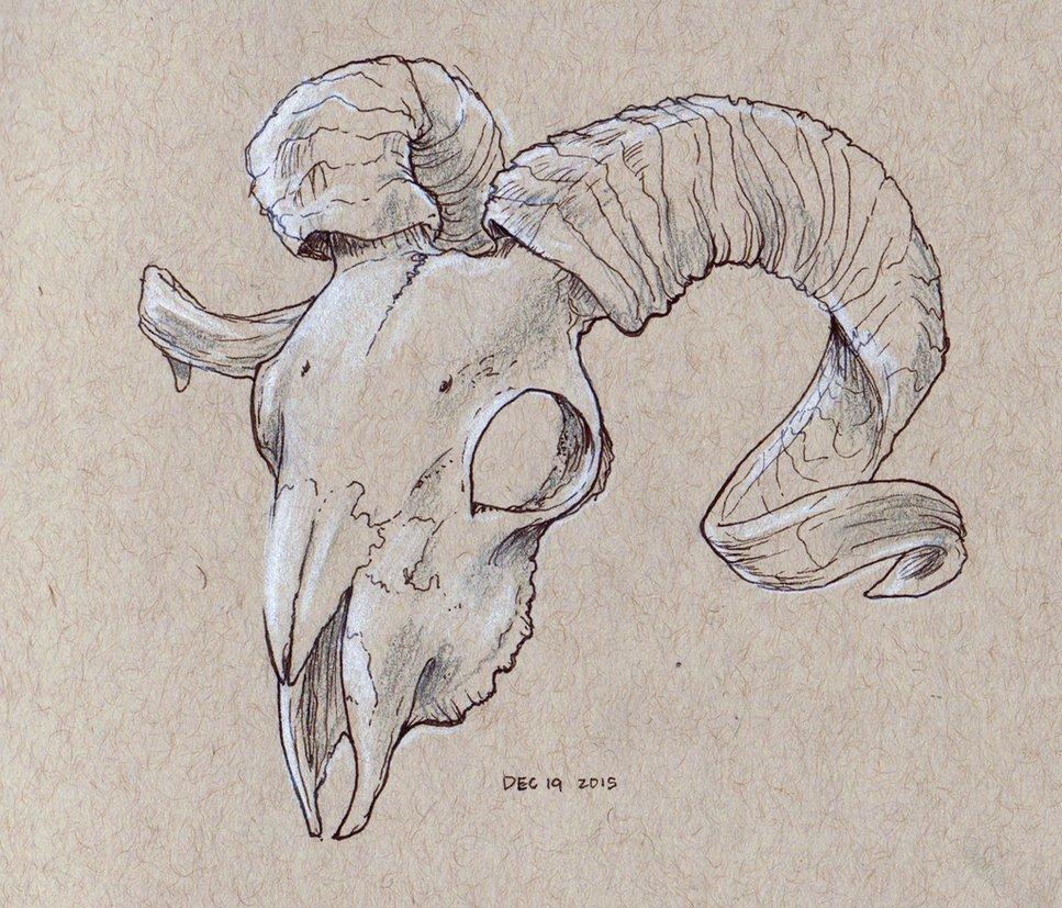 967x827 Ram Skull Study By Angiemyst